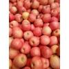大量供应红富士苹果15564255375