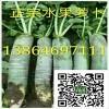 潍坊青萝卜产地便宜了