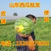 山东西瓜价格现在多少钱一斤批发15266676002