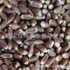 农大876黑小麦原粮 批发不做种子用不保发芽率
