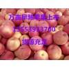 早熟红富士苹果产地 山东美八苹果价格