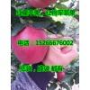 山东红星苹果哪里价格便宜15266676002