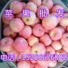 15266676002批发苹果价格哪里好,山东红富士苹果价格