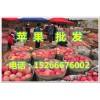 15266676002今日山东红富士苹果降价批发