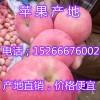 山东苹果基地红富士苹果什么价格15266676002
