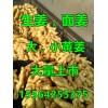 山东生姜价格15564255375