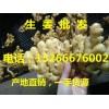 山东省生姜基地价格行情15266676002